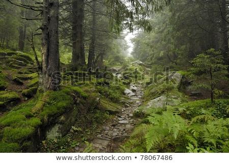 Dağ dere orman tepeler doğa görüntü Stok fotoğraf © dariazu