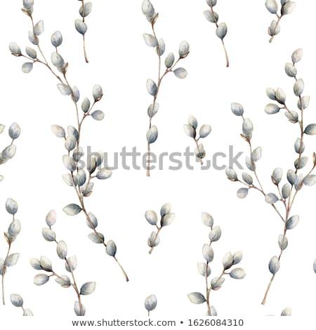 Wielkanoc pussy wierzba górę widoku kwiat Zdjęcia stock © furmanphoto