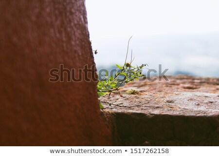 ストックフォト: 壁 · 女性 · 手