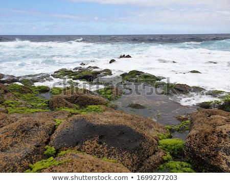 Schiumoso onde mare colorato ciottoli spiaggia Foto d'archivio © HypnoCreative