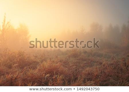 ködös · napfelkelte · fű · égbolt · nap · absztrakt - stock fotó © joyr