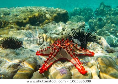 ракушки коллекция красивой морем океана песок Сток-фото © gant