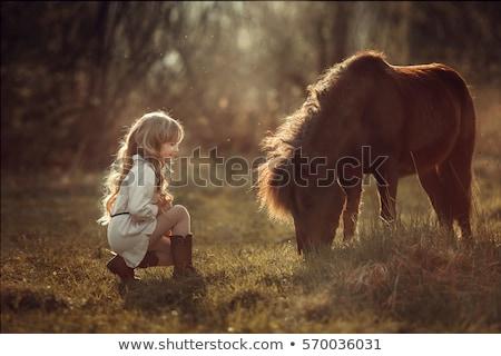 Pony cavallo ritratto verticale occhi faccia Foto d'archivio © milsiart