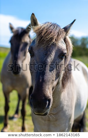 Couple standing in front of field of horses Stock photo © photography33