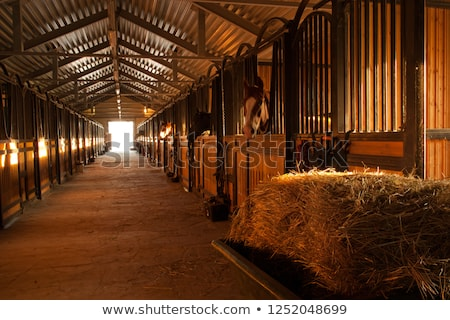 the horse is stabled Stock photo © Aliftin