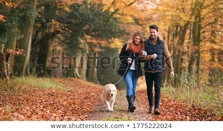 Pareja caminando bosques mano pelo árboles Foto stock © photography33