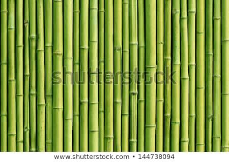 Groene bamboe geïsoleerd witte natuur leven Stockfoto © Pakhnyushchyy