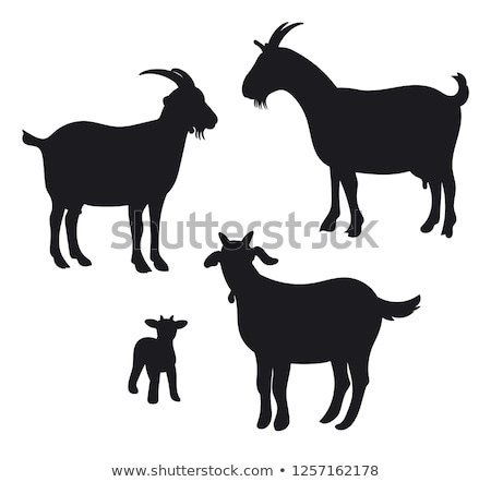 silhouette of goat Stock photo © perysty