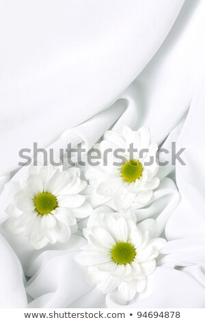 fondness with flowers #3 Stock photo © dolgachov