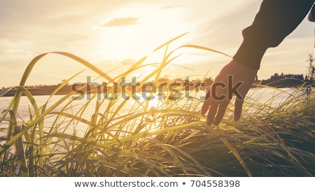 érzékeny érintés érzékeny érintés virág család tavasz Stock fotó © konradbak