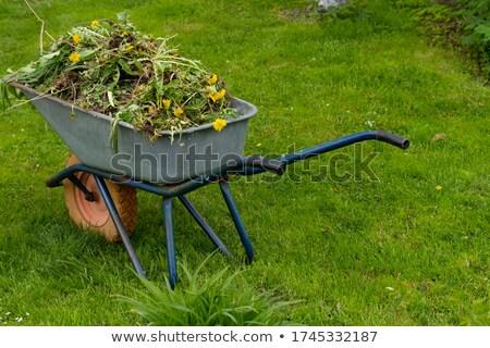Wheelbarrow with waste Stock photo © simply