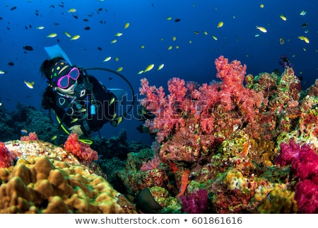 Seafan and tropical reef in the Red Sea. Stock photo © stephankerkhofs
