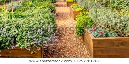 市 · 庭園 · ガーデニング · 個々の · 成長 · 成長 - ストックフォト © Rob300