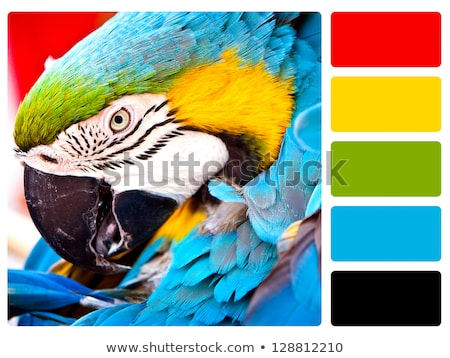 Parrot bird colour palette swatch Stock photo © REDPIXEL
