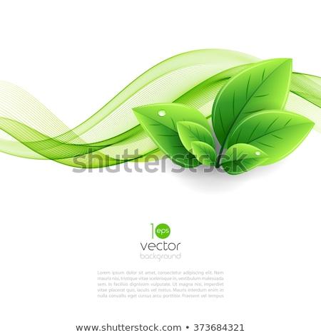 Környezeti zöld levél pillangók világoszöld bokeh fények Stock fotó © maxmitzu