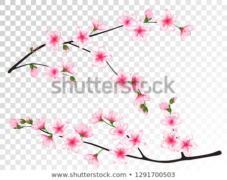 blooming plum blossoms Stock photo © Fotaw