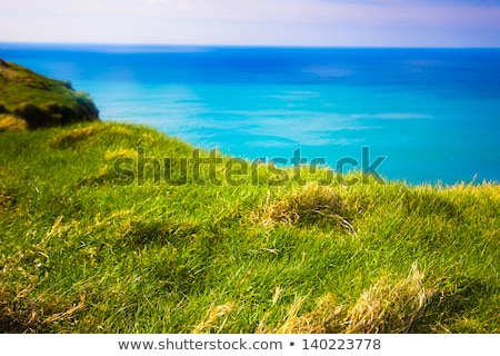 Grass ledge and ocean Stock photo © jrstock