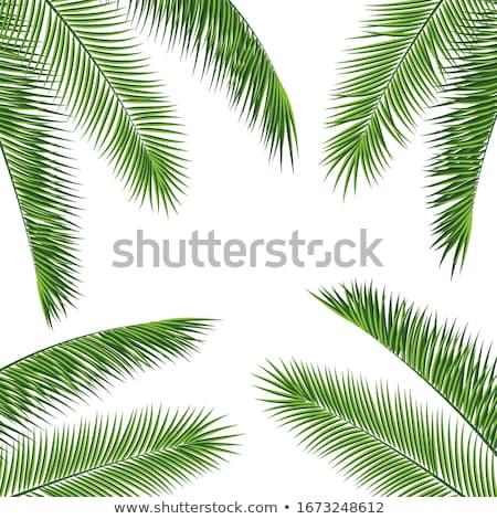 Photo stock: Palmier · laisse · frontière · belle · fraîches