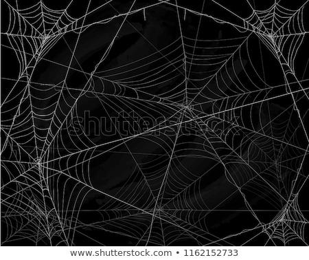 Spinnennetz Textur grünen Garten Web Spinne Stock foto © jonnysek