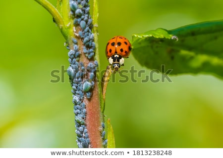 Coccinelle escalade herbe 	 tige sept place Photo stock © sarahdoow