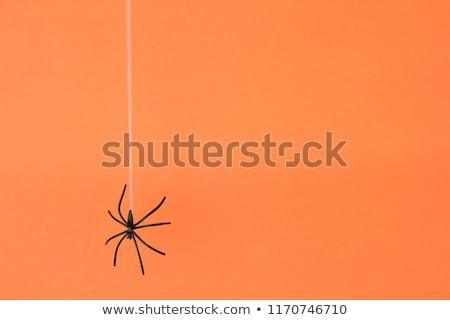 pókháló · fényes · cseppek · víz · tavasz · szépség - stock fotó © fesus