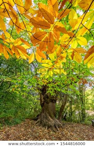 mediterráneo · forestales · panorama · pino · panorámica · vista - foto stock © hraska