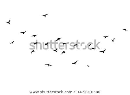 birds design bird collection stock photo © kiddaikiddee