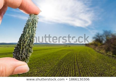 Zöld ásvány izolált fehér kő ékszerek Stock fotó © jonnysek