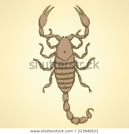 sketch horrible scorpion in vintage style stock photo © kali