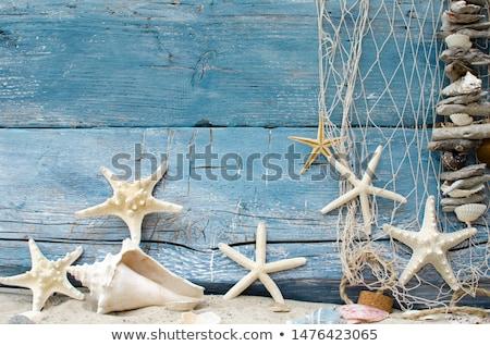 Starfish madeira natureza projeto quadro Foto stock © yelenayemchuk
