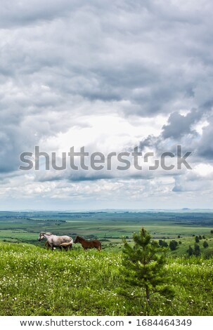 Inekler atlar gökyüzü bulutlar çim Stok fotoğraf © AlisLuch