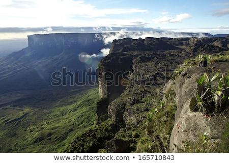 Photo stock: Suivre · Venezuela · amérique · du · sud · eau · forêt · nature