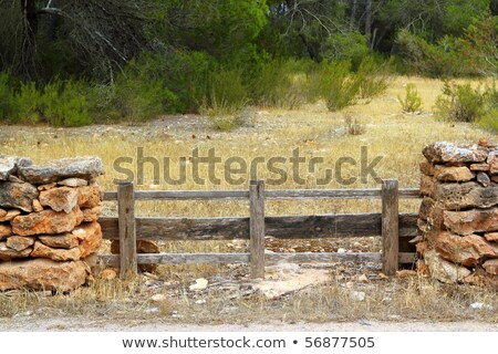 Metselwerk stenen muur houten hek pine bos Stockfoto © lunamarina