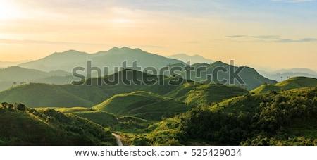 Brouillard vert montagnes fils Thaïlande paysage Photo stock © vichie81