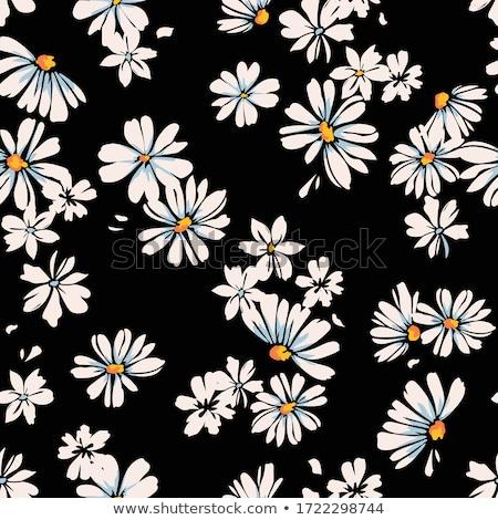 Margaridas primavera belo temporada Irlanda textura Foto stock © morrbyte