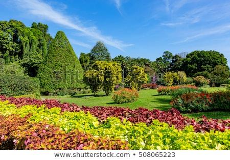 bahçeler · güzel · çiçekler · ağaçlar - stok fotoğraf © meinzahn