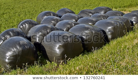 bale of straw infold in plastic film (foil) to keep dry in autum Stock photo © meinzahn