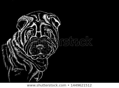 Retrato escuro preto belo amigo animal de estimação Foto stock © vauvau