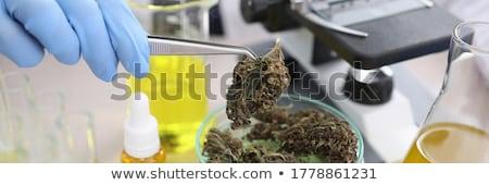hennep · gebruikt · juridische · drugs · veel - stockfoto © bdspn