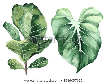 Green fern and other plants Stock photo © bezikus