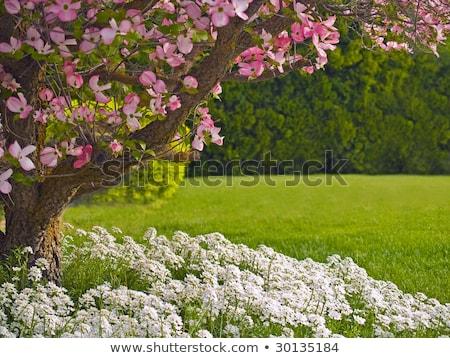 Stockfoto: Roze · boom · voorjaar · liefde · tuin · bed