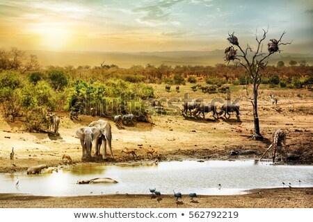 животные · пруд · сцена · иллюстрация · небе · фон - Сток-фото © bluering