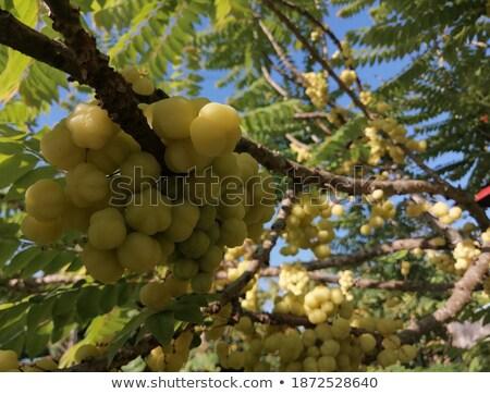 meyve · arka · plan · bitki · taze · tatlı - stok fotoğraf © deandrobot