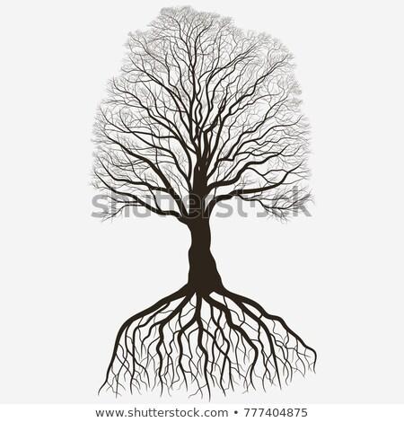 дерево силуэта корень черный голый дуб Сток-фото © Andrei_