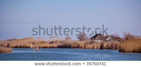 Göl yüksek görmek tuna delta Romanya Stok fotoğraf © igabriela