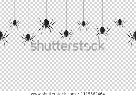 Halloween örümcek örnek gece şapka karikatür Stok fotoğraf © adrenalina
