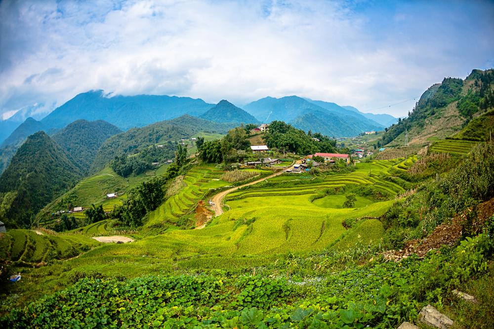Stockfoto: Vietnam · kat · dorp · landschap · december