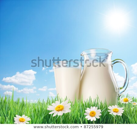 Jug With Milk And Grass And Flowers White Background Stock photo © adamson