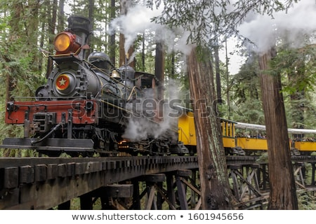 Railroad Tracks and Redwoods Stock photo © yhelfman