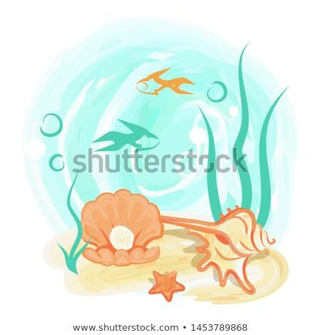 Açmak turuncu deniz kabuk parlak inci Stok fotoğraf © robuart
